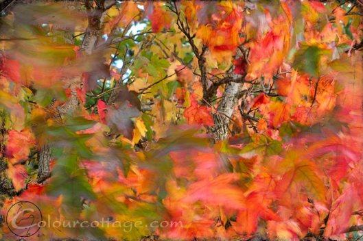 long exposure leaves - no photoshopping!